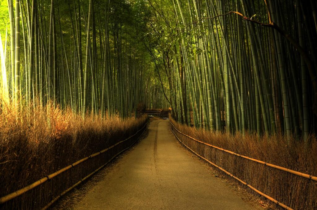 Дорога, уходящая в даль, посреди бамбуковой рощи