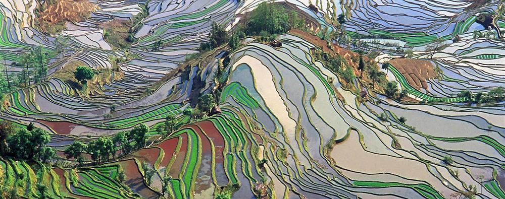 Рисовые террасы в Юннане представляют собой абстрактный рисунок с высоты птичьего полёта.