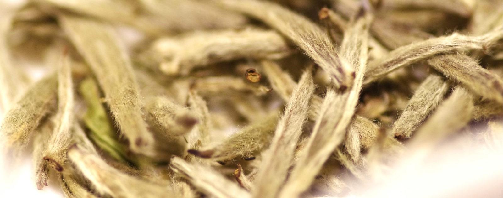 Серебряные иглы - Белый чай из почек