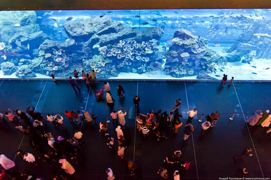 Гигантский аквариум в Дубай.